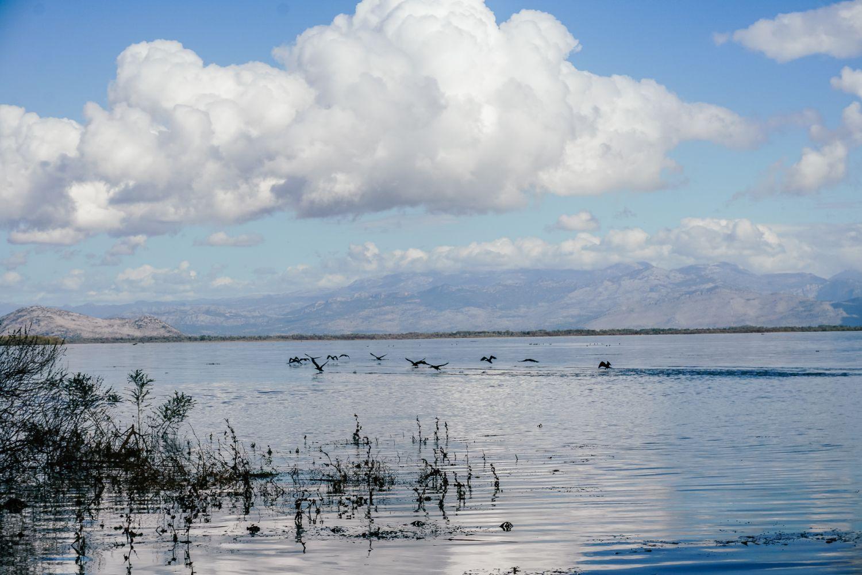 Ilość ptaków na jeziorze jest niesamowita.