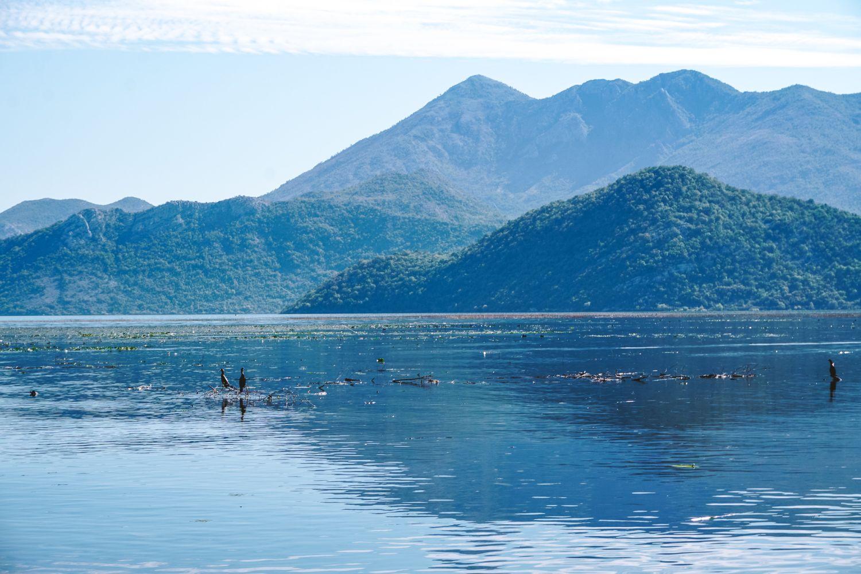 Mikroklimat jeziora sprzyja nie tylko ptakom, na tych wzgórzach idealnie rosną winorośla.