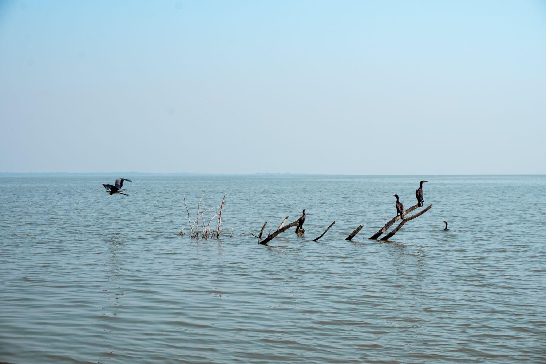 Park Narodowy Jeziora Szkoderskiego to raj dla miłośników przyrody.